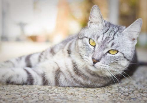 Ipertensione, ne soffrono anche gli amici animali