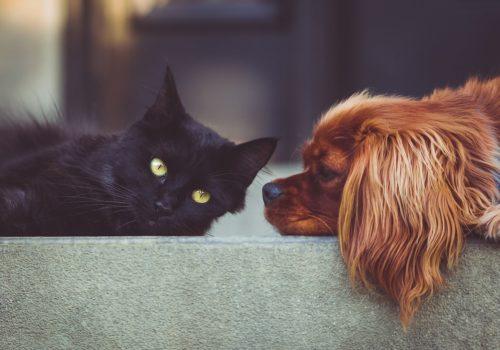 Parassiti intestinali di cane e gatto: come prevenirli
