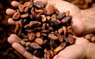 Bean to bar: dalla fava al cioccolato di qualità, per passione
