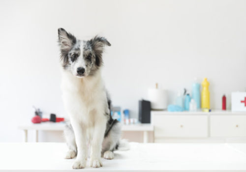 Ozonoterapia: utile anche per i nostri amici animali