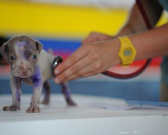 omeop-veterinaria