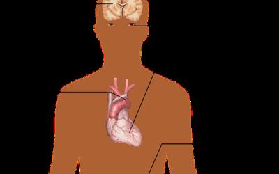 Perché è difficile raggiungere il valore ottimale della pressione arteriosa?