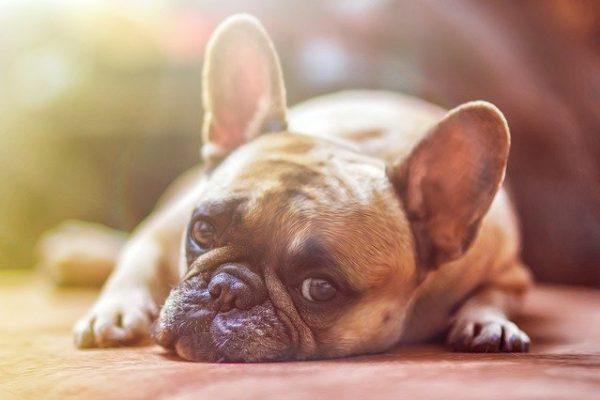 Animali domestici 10 consigli per evitare il colpo di calore